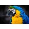 Papagájos Vászonkép 071