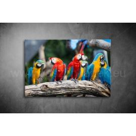 Papagájos Vászonkép 072