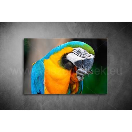 Papagájos Vászonkép 073