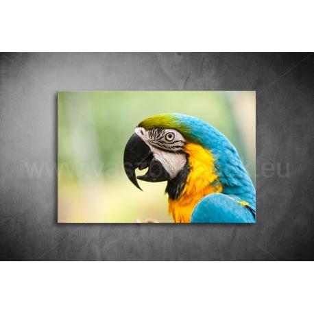 Papagájos Vászonkép 074