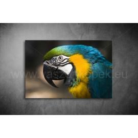 Papagájos Vászonkép 075