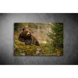 Medvés Vászonkép 089