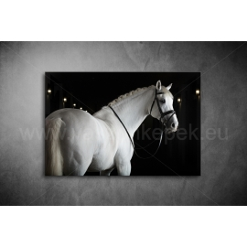 Fehér Ló Vászonkép 097