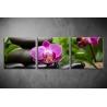 Többrészes Orchidea vászonkép 009 - (választható formák)