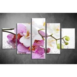 Többrészes Orchidea vászonkép 012 - (választható formák)