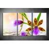Többrészes Orchidea vászonkép 039 - (választható formák)