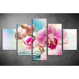 Többrészes Orchidea vászonkép 042 - (választható formák)