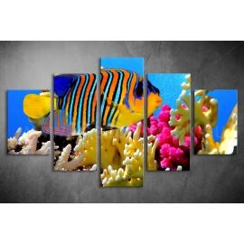 Többrészes Pillangóhal vászonkép 041 - (választható formák)