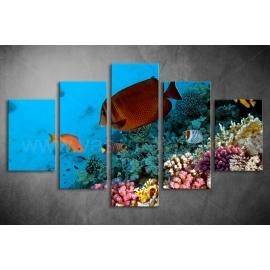 Többrészes Halak, Korallok vászonkép 045 - (választható formák)