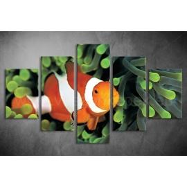 Többrészes Bohóchal vászonkép 050 - (választható formák)