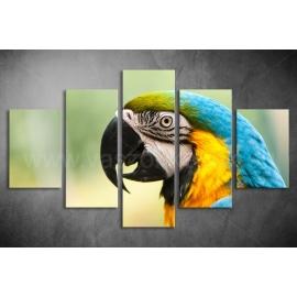 Többrészes Papagájos vászonkép 074 - (választható formák)