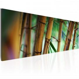 Kép Wild bamboos