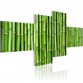 Kép Green bamboo stalks