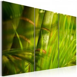 Kép Fresh green tropical grass