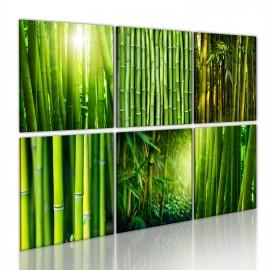 Kép Bamboo has many faces