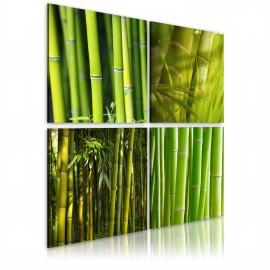 Kép Bambusznád