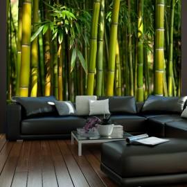 Fotótapéta Ázsiai bambusz erdő