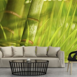 Fotótapéta bamboo nature zen