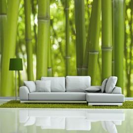 Fotótapéta bamboo green