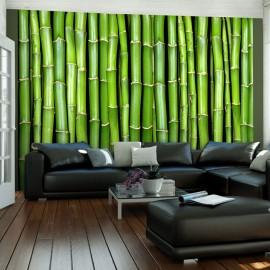 Fotótapéta Bambusz fali