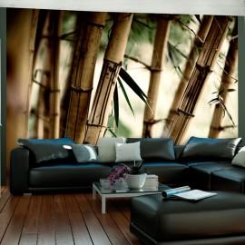 Fotótapéta Fog and bamboo forest