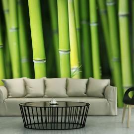Fotótapéta Bamboo