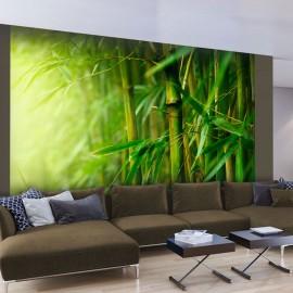Fotótapéta jungle bamboo