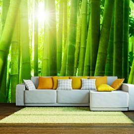 Fotótapéta Sun and bamboo
