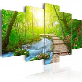 Kép Sunny Forest