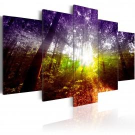 Kép Rainbow Forest