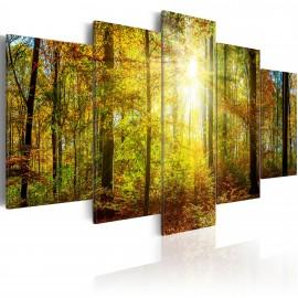 Kép Mystical Forest