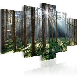 Kép Fairytale Forest