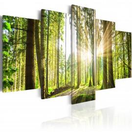 Kép Forest Kingdom