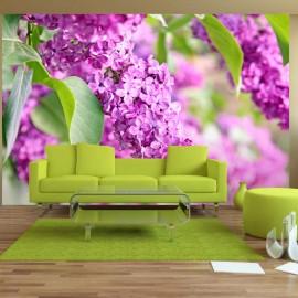 Fotótapéta Lilac flowers