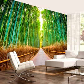 Fotótapéta Bamboo Forest