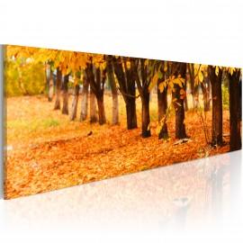 Kép Golden leaves