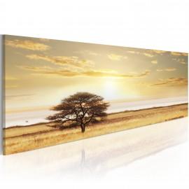 Kép Lonely tree on savannah