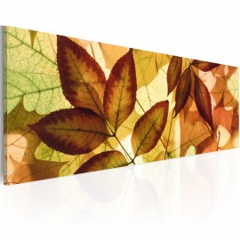 Kép collage leaves