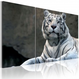 Kép White tiger