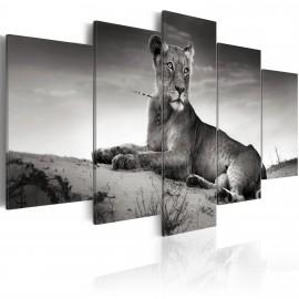 Kép Lioness in a desert