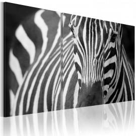 Kép Mrs. Zebra