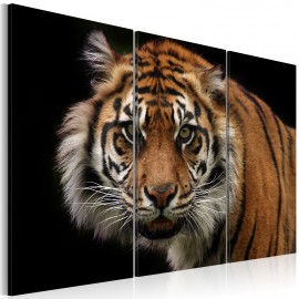Kép A wild tiger