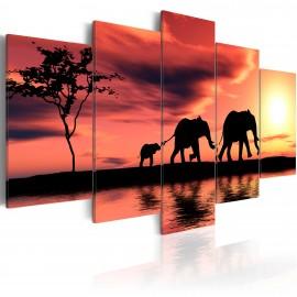 Kép African elephants family