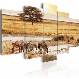 Kép Zebras on a savannah