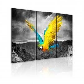 Kép Birdofparadicsom