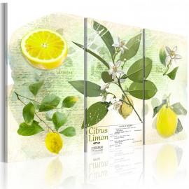 Kép Fruit lemon