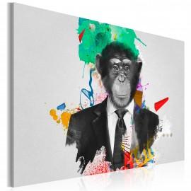 Kép Mr Monkey