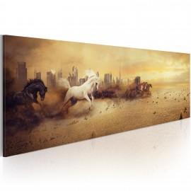 Kép City of stallions