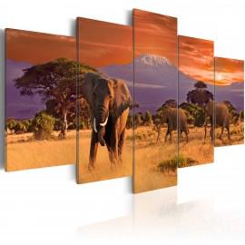 Kép Africa Elephants