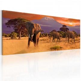 Kép March of african elephants